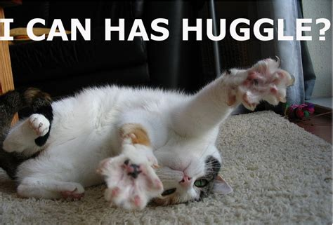 Lol cat Pictures the Next I Can Has Cheezburger Kitten