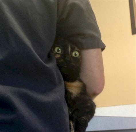 16 Funny Photos Of Cats Who Think They're Hiding From The Vet