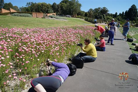 Largest paper daisy display in Eastern Australia unveiled